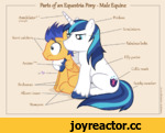 Parts of an Equestria Pony - Male Equine . Prickers Scent catckers AnnikilatorUA Aviator PA Scrutinisers Fakulous locks Filly porter Coltie mark Brokooves Alicorn tosser Stompers AumwHfi *ll.£ '<s»iW3