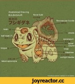 Anatomical Drawing BULBASAUR
