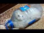 Как поймать кота / How to catch a cat,Animals,,ловушка для игривого кота, забавная ситуация как кот сам себя загнал в ловушку - а как же выбраться?  Подписка на канал - http://www.youtube.com/user/MSV401?sub_confirmation=1 -----------------------------------------------------------------------------