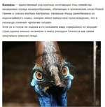 Казуары — единственный род крупных нелетающих птиц семейства казуаровых отряда казуарообразных, обитающих в тропических лесах Новой Гвинеи и северо-востока Австралии. Название птицы заимствовано из индонезийского языка, которое имеет папуасское происхождение, что в переводе означает «рогатая голова