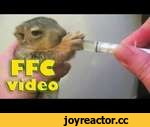 Люди приходят на помощь / People come to the rescue,Animals,,Send your video ►► ffcvideo1@gmail.com  Click to SUBSCRIBE for more video! ►► http://bit.ly/FFCv1deo Music: Silent Partner - Every Step Spaarkey - Soon he'll be back Silent Partner - Cloud Patterns Jason Walker - Everybody Lies ___________