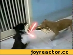 Кот.mp4,Animals,кот,дарт вейдер,звездные войны,кот дарта вейдера