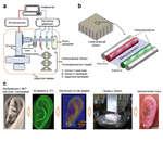 Поликапролактон  (т 1 ^ С Регулятор ^-контроллер j ^ давл0НИЯ Модуль кзртр/дхей Напечатанный объект 'ч........... Закрытая камера Напечатанный объект Поликапролактон (серый) А: клетка А (красный) В: клетка В (зелёный) S: защитный материал Изображение с МРТ или комп, томографи