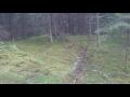 """Как-то было дело в лесу, встретились лиса-воришка и глупый мужик,People & Blogs,,Лиса-воришка стала главным героем курьезного видео, размещенного в сети жителем Литвы Donatas Petraitis.   Мужчина, ехавший по лесной дороге, обнаружил у себя на пути лису. Водитель вышел из авто и попытался наладить """"к"""