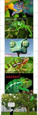 Самый древний из известных хамелеонов найден в Европе (находке примерно 26 млн лет), Движения левого и правого глаз г Хамелеоны обладают круговым 01 ществ! огласованно, Р.Б. это Ранго, он крут! НО, САМОЕ УДИВИТЕЛЬНОЕ, НЕСОМНЕННО, ЭДвИ)ССПОСОБНОСТЬ МЕНЯТЬ ОКРАСКУ, МАСКИРУЯСЬ ПОД МЕСТНОСТЬ... 1