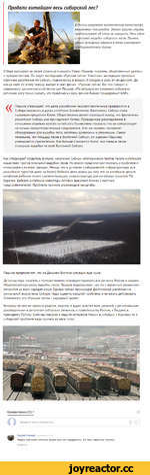 Продали китайцам весь сибирский лес?  т В России назревает экологическая катастрофа невиданных масштабов. Однако власти страны предпочитают об этом не говорить. Речь идет о массовой вырубке сибирских лесов. Причем, самым активным образом в этом участвуют предприниматели Китая. О беде рассказал