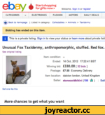 ebay è Start shopping for gifts now > welcome, sign in or register CATEGORIES ▼ ELECTRONICS FASHION MOTORS DAILY DEALS ф Back to homepage | Listed in category: Collecta Wes > Animals > Taxioermy Bidding has ondod on this item. I This is a private listing. Sign in to view your status or learn mo