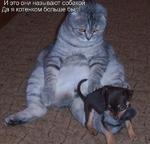 И это они называют собакой, Да я котенком больше был!